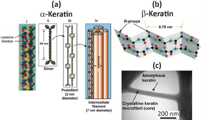 Структура Альфа кератина
